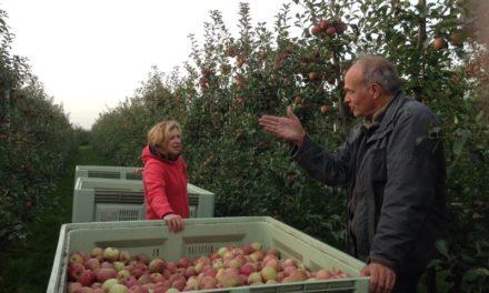 Appels plukken 2013